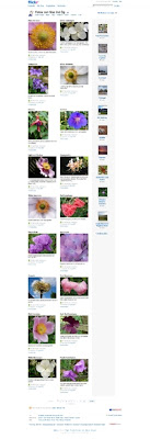 My Flickr Photos