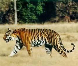 Over thousand wild animals