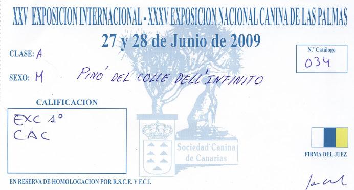 XXV EXPOSICIÓN INTERNACIONAL CANINA DE LAS PALMAS