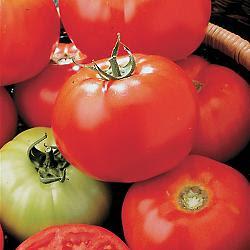 http://1.bp.blogspot.com/_i5kf-QpaTnI/SnhrQ3HjTCI/AAAAAAAAAao/3ILxSJXcW78/s400/Celebrity+Tomato.jpg
