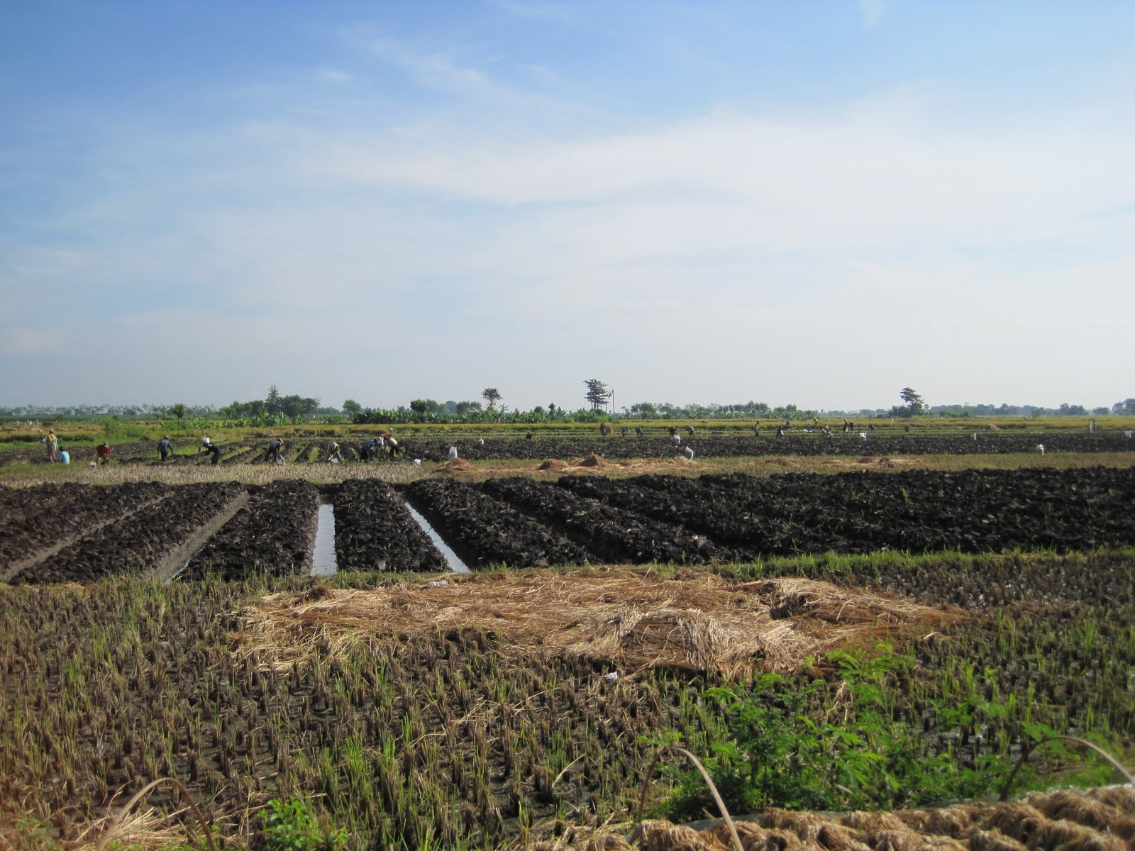 how to make your soil fertile