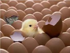 Entre tantos huevos y un pollito