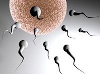 Picture Emerging on Genetic Risks of IVF