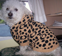 Buddy wearing furrme.com Kashwere sweater