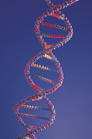 Link Between Infertility, Low Egg Reserve, and Breast/ovarian Cancer Gene (BRCA1) Suggested