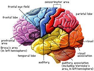 Music and the Mind: Prefrontal Lobe