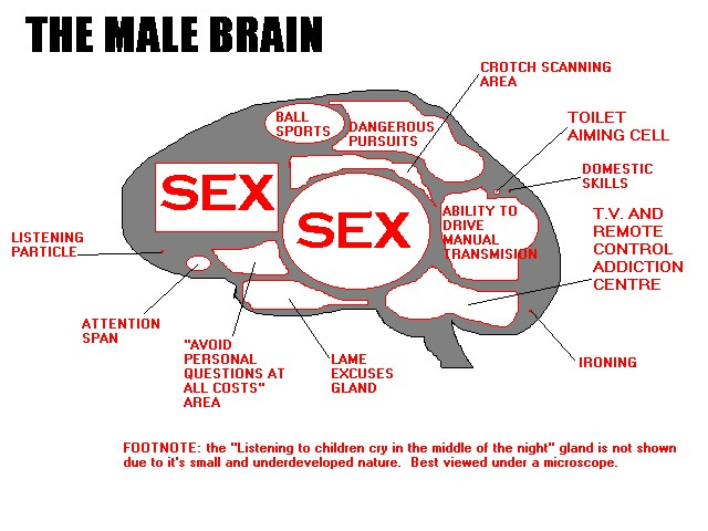 Men and women s brain