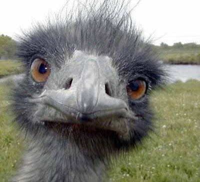 [Image: ostrich-head.jpg]