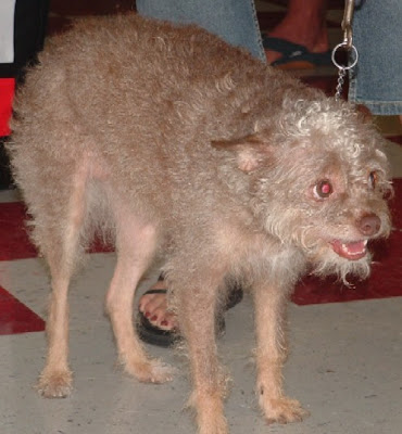 animal planet world's ugliest dog