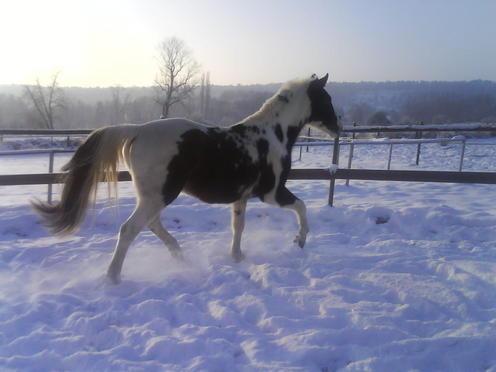 Billy Kris, cheval d'indien Polonais en Normandie - Page 3 DSC00605