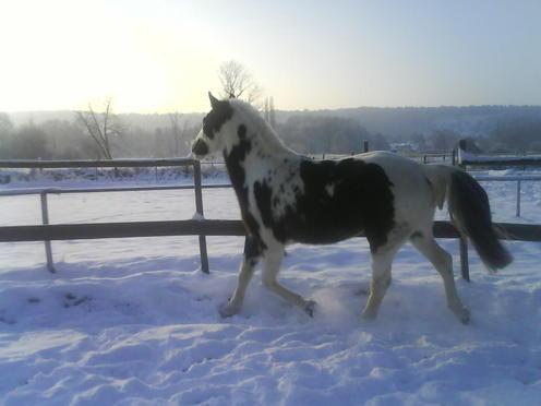 Billy Kris, cheval d'indien Polonais en Normandie - Page 3 DSC00607