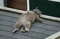 cantajuegos el señor don gato