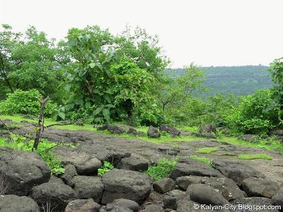 Stones Jungle