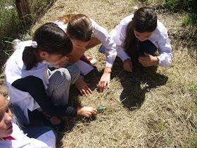 Educación Ecológica en el Patio de la Escuela