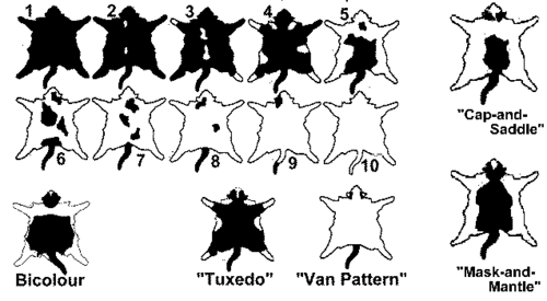 felinos