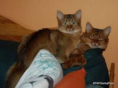 Kissojen ehdoilla
