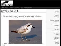 BIRDPHOTOGRAPHERS NET