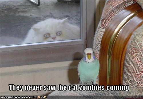 funny zombie. Kittehs and zombies :)