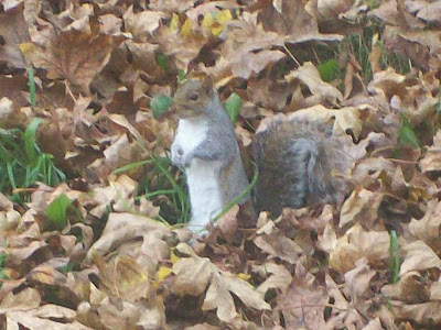 Imagine a cute little squirrel here