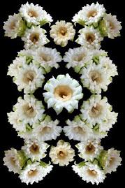 SAGUARO CACTUS FLOWER COMPOSITE