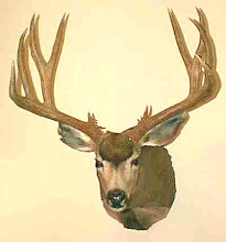 Full Draw Taxidermy