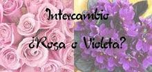 Intercambio Rosa