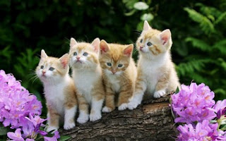 Foursome Cats Wallpaper