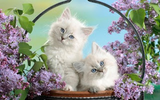 Lovely Cat Pair