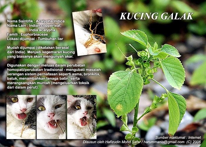 m|staken |nsan|ty: Pokok kucing galak.