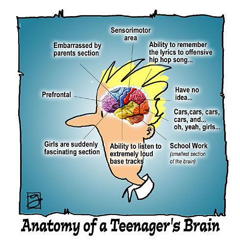 male teen brain images