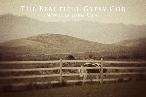 The Beautiful Gypsy Cob In Wallsburg Utah