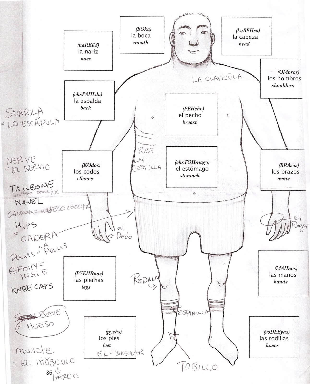 Images Human Body Diagram For Kids Spanish
