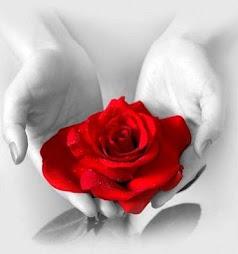 Rosa do afeto