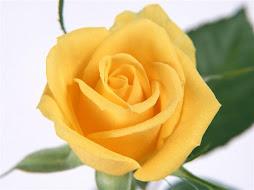 Rosa da esperança