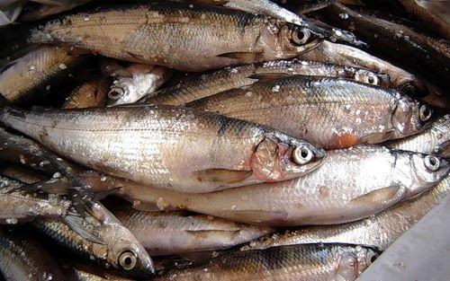 какая рыба ловится в октябре на водохранилище