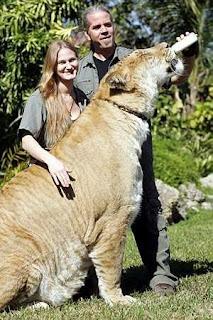 Liger [www.ritemail.blogspot.com]