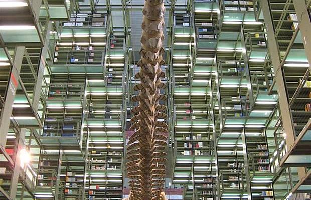 واشهر مكتبة العالم Libraries_015.jpg