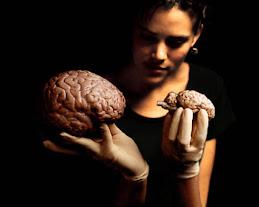 Bienvenido a Cuidatucerebro.com!
