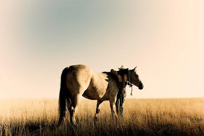 ... paja a caballos olympic cameltoe gymnastics caballos polygam