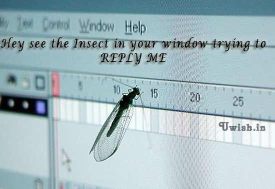 Reply me E greeting cards and wishes with insect on the monitor.