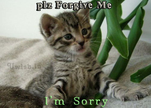 Please Forgive me. I am sorry with a Cute look by a cat asking sorry. Sorry E greeting cards and wishes.