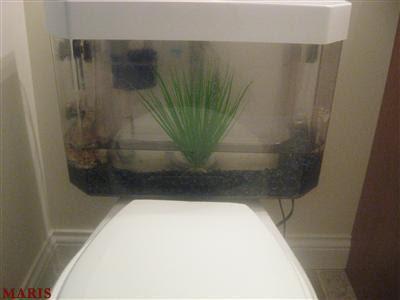 goldfish tank size. goldfish tank. Goldfish Tank