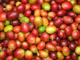 O fruto: