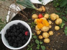 Lesurvivaliste le sc nario rouge for Rendement permaculture