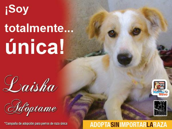 Laisha en adopción