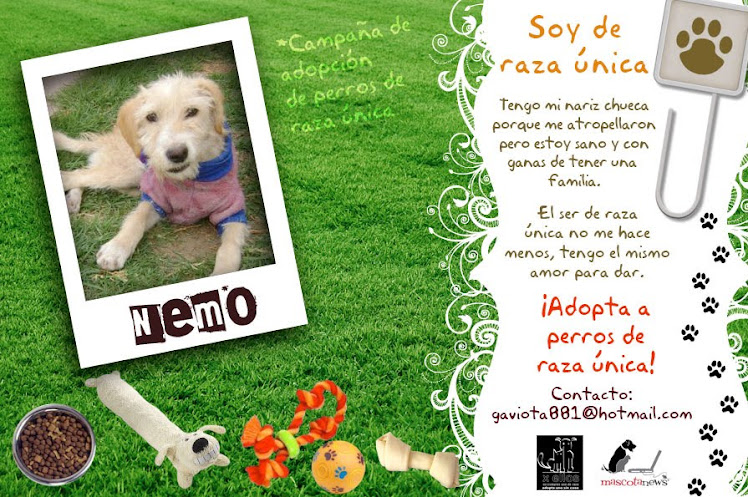Campaña de adopción para perros de raza única