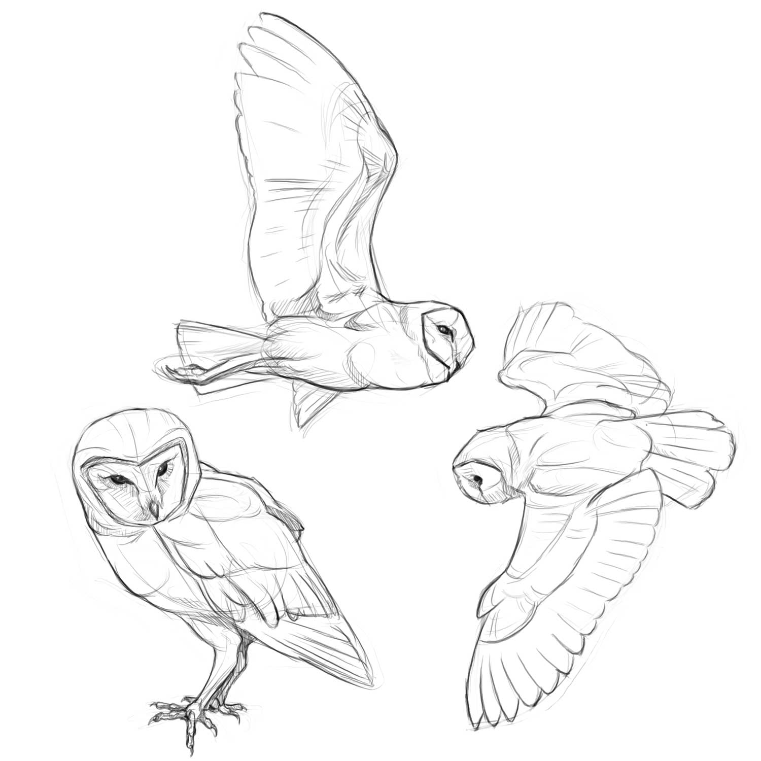 Barn Line Drawing Barn Owl Line Art More Barn