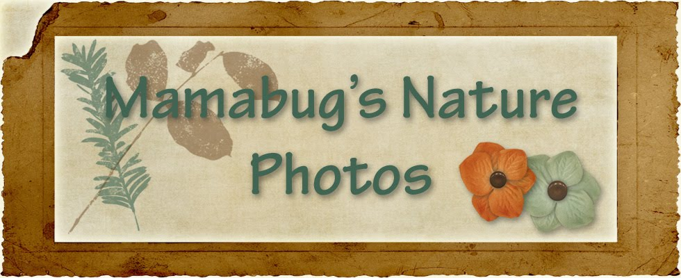 Mamabug's Nature Photos