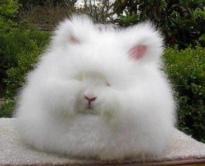 Résultat de recherche d'images pour 'lapin poilu'