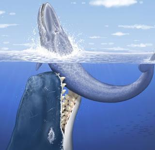 Leviathan melvillei